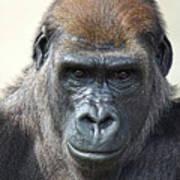 Gorilla 1 Art Print