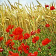 Grain And Poppy Field Art Print