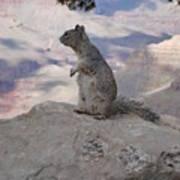 Grand Canyon Squirrel Art Print