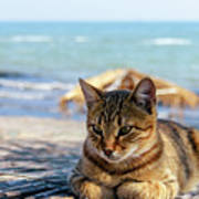 Gray Cat On The Background Of The Sea 1 Art Print
