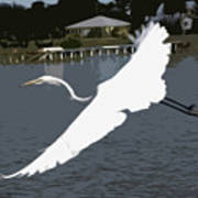 Great Egret At Melbourne Beach Art Print