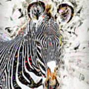 Grevys Zebra, Samburu, Kenya Art Print
