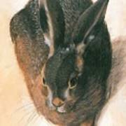 Hare 1528  Art Print