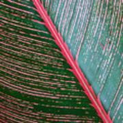 Heliconia Leaf Art Print