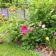 Hibiscus In The Garden Art Print