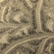 Extraordinary Hoarfrost Scallop Patterns In Sepia Art Print