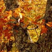 Hometown Series - Deep In The Woods Art Print