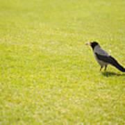 Hooded Crow Bird Gathering Hay Art Print