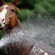 Horse Bath II Art Print