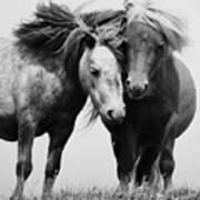 Horses 2 Art Print
