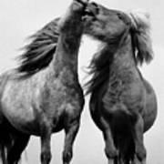 Horses 6 Art Print