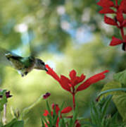 Hummingbird Delight Art Print