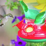 Hummingbird Found In Wild Nature On Sunny Day Art Print
