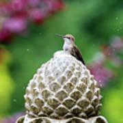 Hummingbird On Garden Water Fountain Art Print