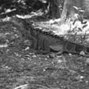 I Iguana Art Print