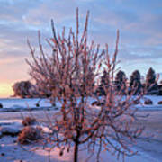 Icy Tree At Sunset  Art Print