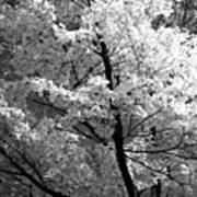 Infrared Tree Pic Art Print
