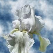 Iris In The Clouds Art Print