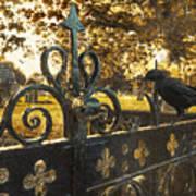 Jackdaw On Church Gates Print by Amanda Elwell
