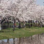 Japanese Cherry Blossom Trees Art Print