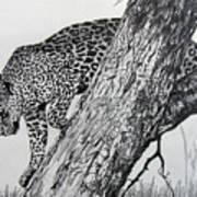 Jaquar In Tree Art Print