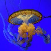 Jellyfish At California Academy Of Sciences In San Francisco, California Art Print
