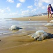 Jellyfish On The Beach  Art Print