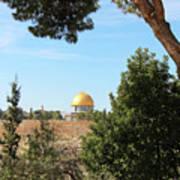 Jerusalem Trees Art Print