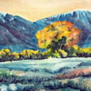 Judys Tree Art Print