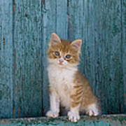 Kitten On A Greek Island Art Print