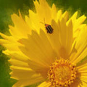 Lady Bug Lookout Art Print