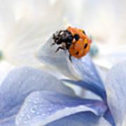 Ladybug Print by Nailia Schwarz