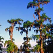 Lake Martin Cypress Swamp Art Print