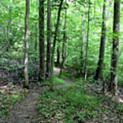 Lakeside Trail Winding Path - Yellowwood Lake Art Print