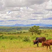 Landscape In Malawi Art Print