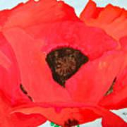 Large Poppy Art Print
