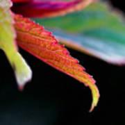 Leaf Study Iv Art Print