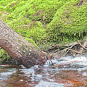 Leaning Tree Trunk By A Stream Art Print