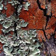 Lichen On Tree Bark Art Print