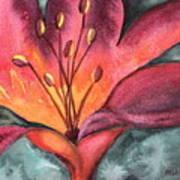 Lily Blaze Art Print