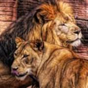 Lion Mates Art Print