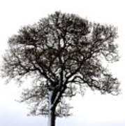 Lone Tree In Field Art Print by John Short