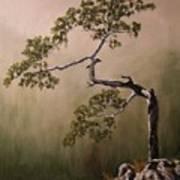 Lonesome Mountain Pine  Art Print