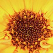 Macro Shot Of A Yellow Flower. Art Print