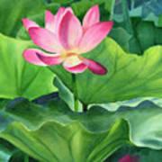 Magenta Lotus Blossom Art Print