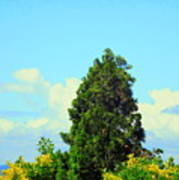 Majestic Evergreen Art Print
