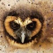 Malaysian Brown Wood Owl Art Print