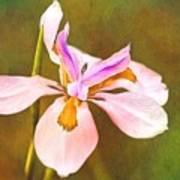 Mama's Iris Art Print