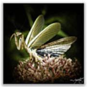 Mantis 22 Art Print