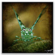 Mantis 5 Art Print